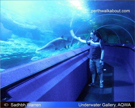 aqwa-aquarium-of-western-australia-4
