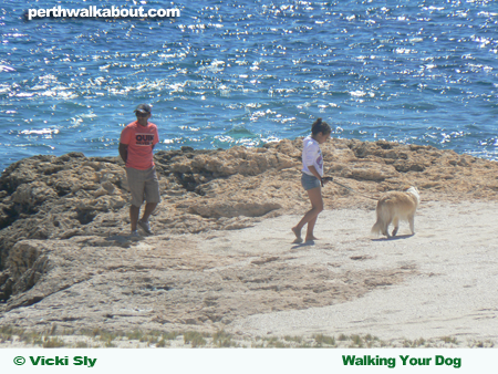 dog-beach-perth-2