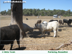 perth-farmstays-150