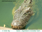 wyndham-crocodile-farm-150