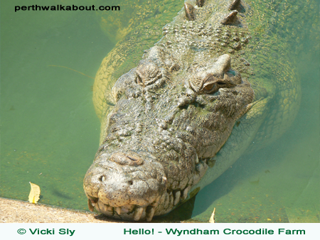 wyndham-crocodile-farm